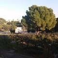 Stasera l'attesa inaugurazione della rinnovata Villa Comunale di Giovinazzo