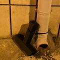 Ratti a Giovinazzo, il PD attacca l'Amministrazione comunale