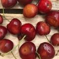 Coldiretti: «C'è un'invasione di moscerini della frutta»