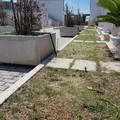 Cimitero, rimosse le erbacce infestanti