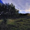 Borgo in Fiore, sabato vernissage al San Martin della mostra fotografica di Vincenzo Catalano