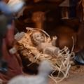 Il 22 dicembre il Comitato Feste accoglierà Gesù Bambino