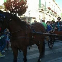 Cavalli, carrozze ed una immensa festa