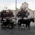 Oggi c'è la sfilata di cavalli, traini e carrozze