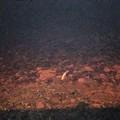Trovato delfino morto a Levante