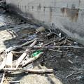 Spiagge sporche in località Trincea: i bagnanti non ci stanno