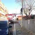 """Nessun espianto di alberi alla  """"Papa Giovanni XXIII """""""