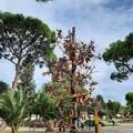 Villa Palombella, alberi secchi nel giardino riaperto nel 2020