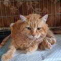 La storia del gatto Lucio commuove e Giovinazzo si mobilita