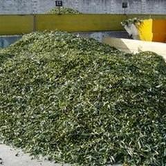 Cooperativa Olivicultori: strascichi polemici dopo il comizio del sindaco