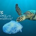 """Un Consiglio comunale  """"plastic free """": LED scrive alle istituzioni cittadine"""