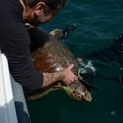 Oltre cento tartarughe marine morte in un anno