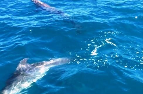 Delfini in branco tra Giovinazzo e Molfetta