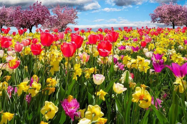 Campo di fiori con mandorli