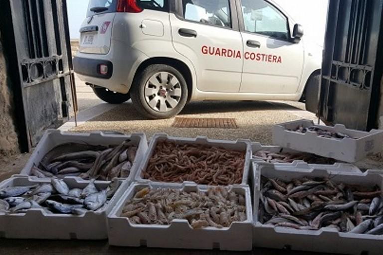 I 40 chilogrammi di prodotto ittico sequestrati