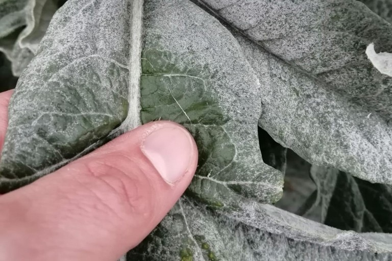 Gelate su verdura