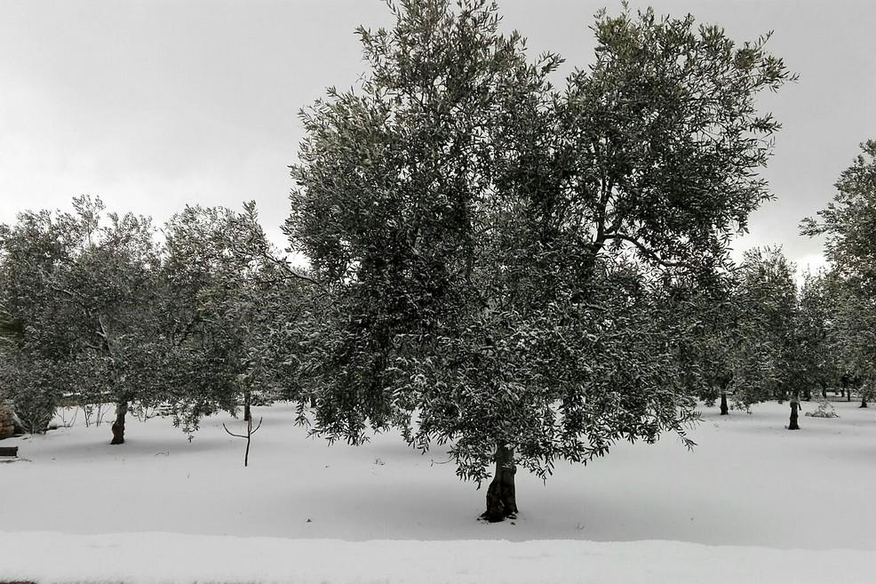 La neve nelle campagne