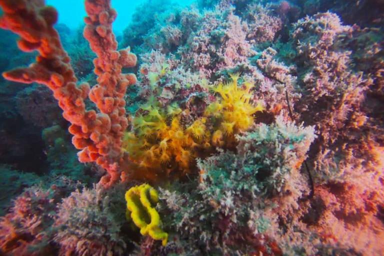 La barriera corallina tra Giovinazzo e Molfetta. <span>Foto Nucleo Sub Molfetta</span>