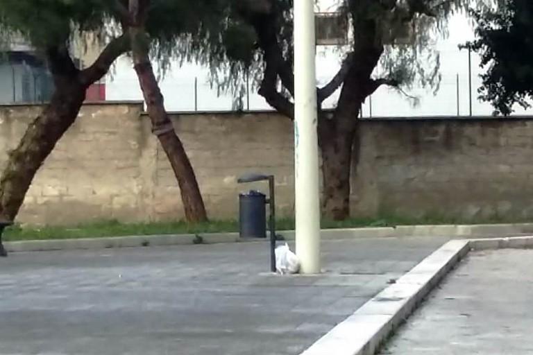 Il sacchetto abbandonato accanto al portarifiuti. <span>Foto F.B. </span>