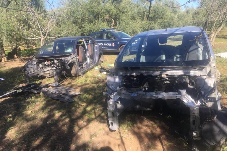 Le due carcasse recuperate dalla Polizia Locale