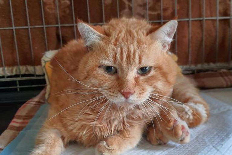 Il gatto Lucio. <span>Foto I Felini di Giovinazzo</span>