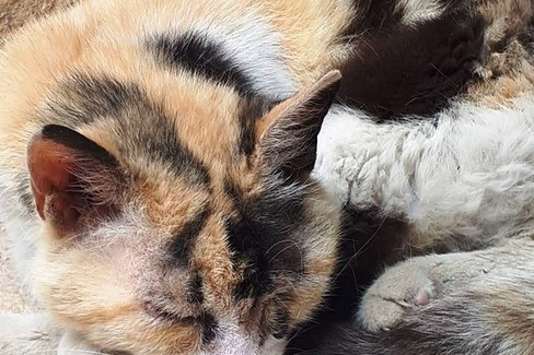 La gatta Pupa