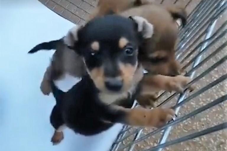 I cuccioli salvati. <span>Foto Lega del Cane Giovinazzo</span>
