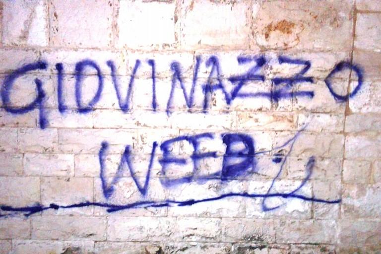 Giovinazzo weed sul muro di Palazzo Vescovile. <span>Foto Gabriella Serrone</span>